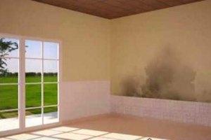Soluciones para paredes humedas