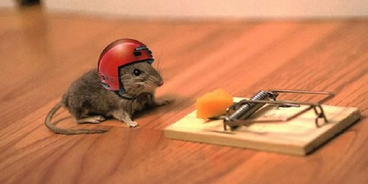jasa anti tikus profesional