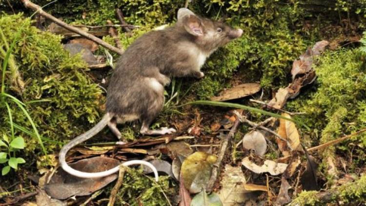 Manfaat tikus bagi kehidupan manusia