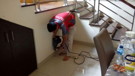 Penyebab dan Cara Mengatasi Kecoa Bersarang di Rumah