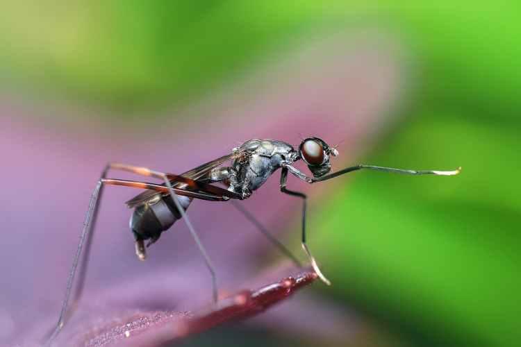Tanaman yang Bisa Mengusir Nyamuk