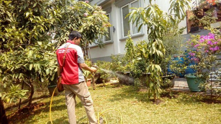 Jenis Nyamuk Berbahaya yang Wajib di Hindari
