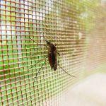 Mencegah Gigitan dari Nyamuk