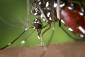 Cara Mencegah Gigitan nyamuk
