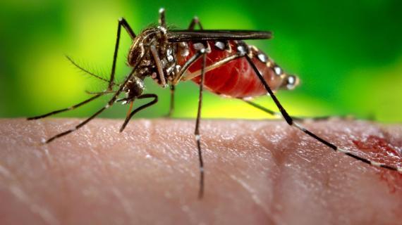 Ternyata ini loh Fungsi Nyamuk