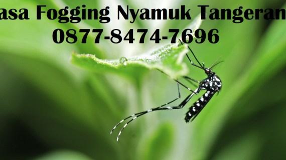 Jasa Fogging Nyamuk Tangerang