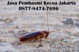Jasa Pembasmi Kecoa Jakarta