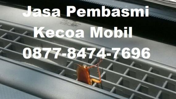 Jasa Pembasmi Kecoa Mobil