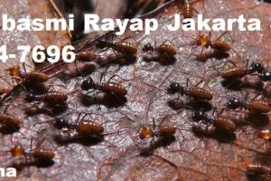 Jasa Pembasmi Rayap Jakarta Selatan