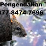 Jasa Pengendalian Hama Tikus