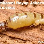 Jasa Pembasmi Rayap Jakarta Timur