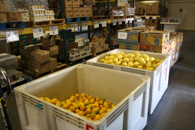 Food bank harvests citrus from local fruit trees