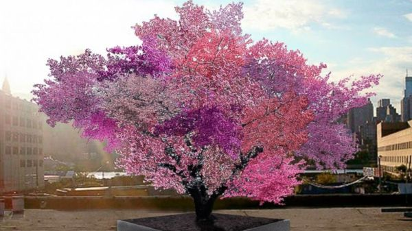 one tree orchard allows you to grow many varieties of fruit on one tree