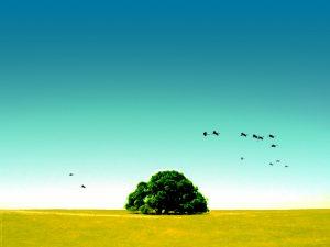 tree-1024
