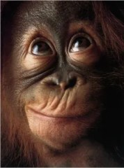flach-tim-monkey-face