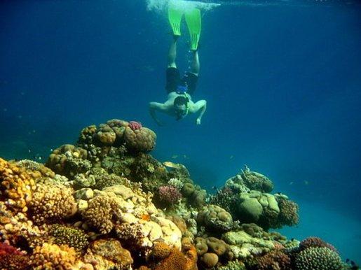 snorkeling_giftun1295532