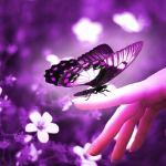 வண்ணத்துபூச்சியின் நிறமற்ற வானவில்