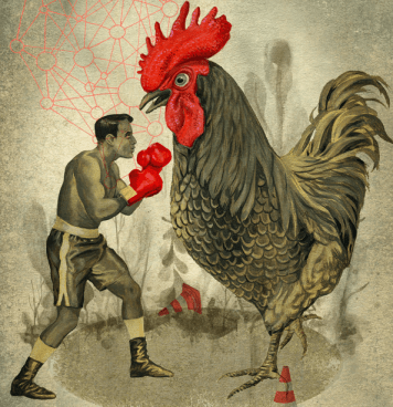 cock_fights_road_cones_chicken_boxing_life_massive_big_sizes