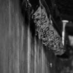 வெளவால்கள் உலவும் வீடு