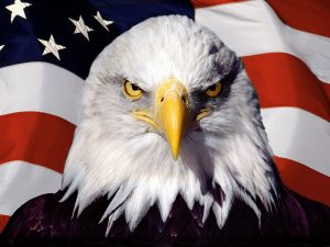 Bald_Eagle_and_flag_United_States_America1