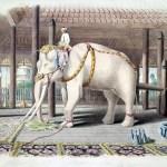 அதிகாரமெனும் நுண் தளை – வெள்ளை யானை