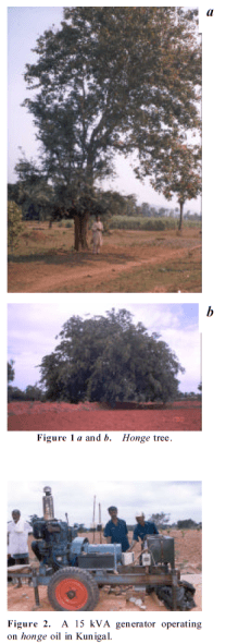Petrol_Alternate_Native_Fuel_Jatropha_Seeds_Energy_Natural_Biofuel_Sustainable_India_Research