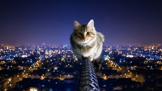 cat_city