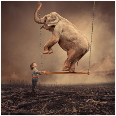 Elephants_Swing_Dance_One_Feet_Kids_Child_Boy_Feel_Touch_Move_Life