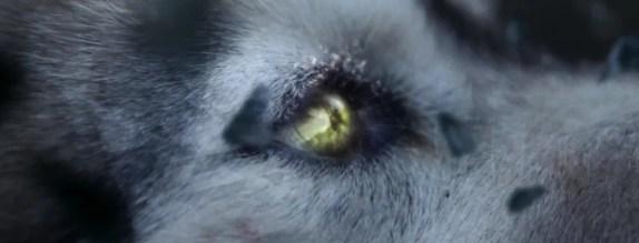 Sia-She-Wolf4