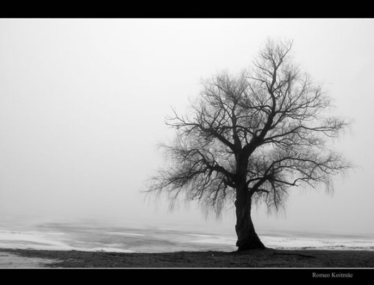 Theettu_Lone_Tree_Fall_Autumn_Leafless_Alone_Standing_Solitude