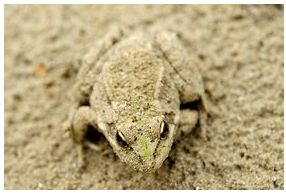Mask_Animal_camouflage_Lizard_Chameleon_Shape_Mingle_Transparent_Faceless_Body_Frog