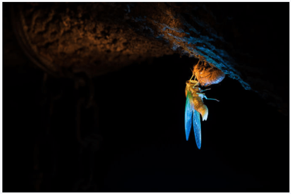 Forest_Bee_Insect_Night