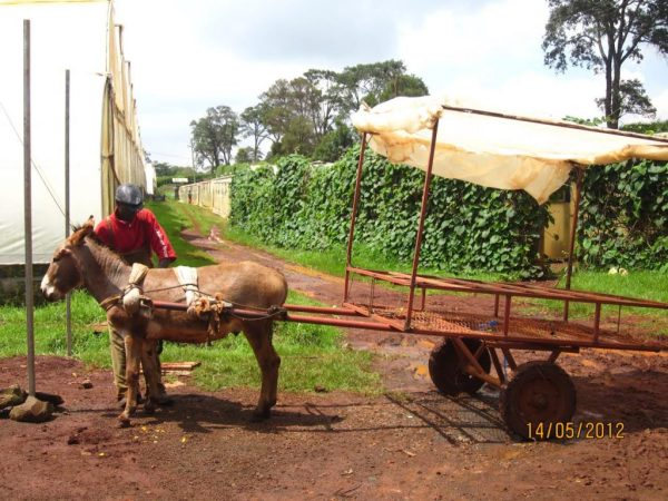 horse_carriage_carts_transport_vehicle_flowers_donkey_weight