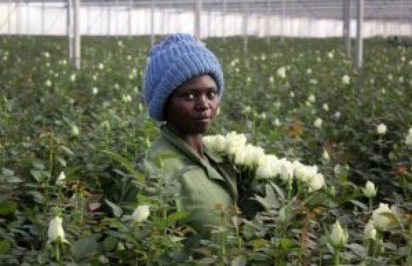 kenyaflower2