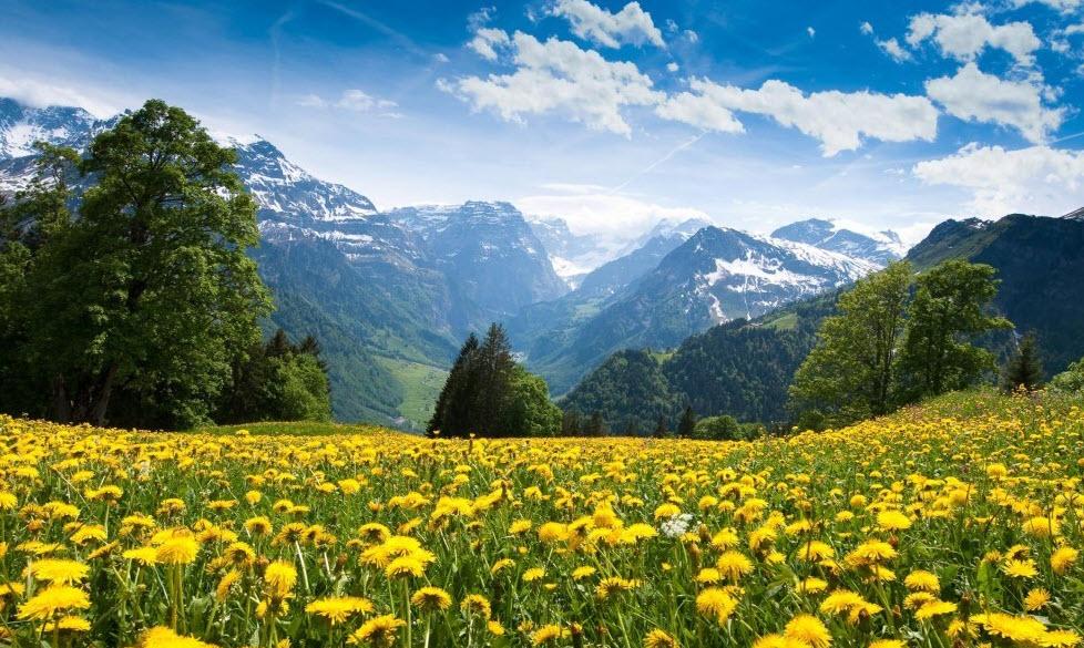 rama meadow village