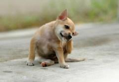 Scratching Dog