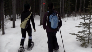 Snowshoeing Kananaskis - walking 2