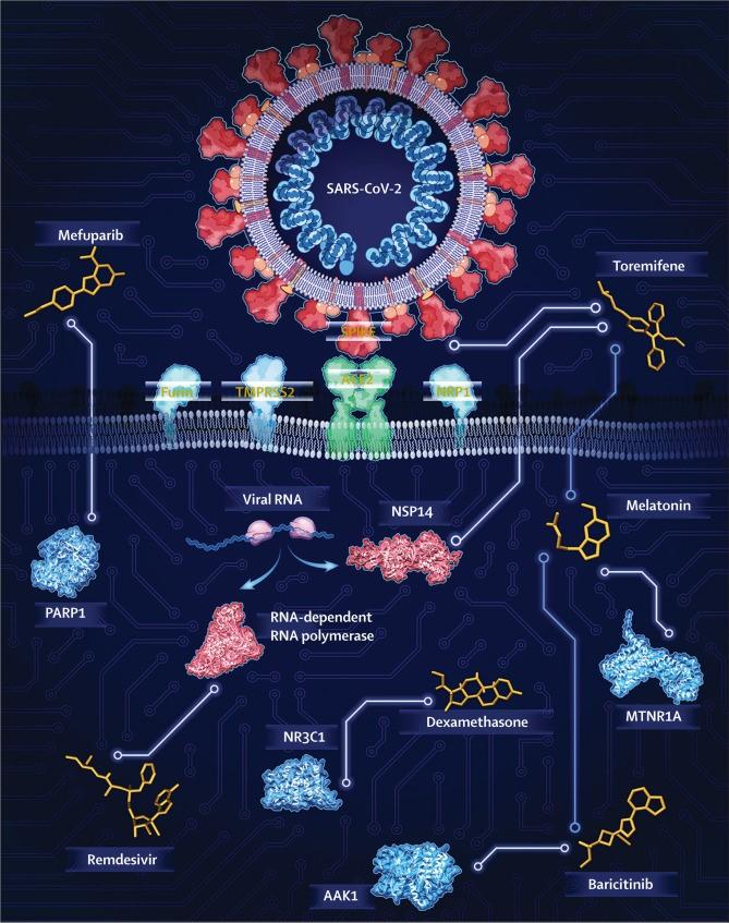 Mefuparib  PARPI  SARS-cov-2  Toremifene  Viral RNA  NSP14  RNA-dependent  RNA polymerase  Dexamethasone  NR3C1  Remdesivir  AAKI  Melatonin  MTNRIA  Baricitinib