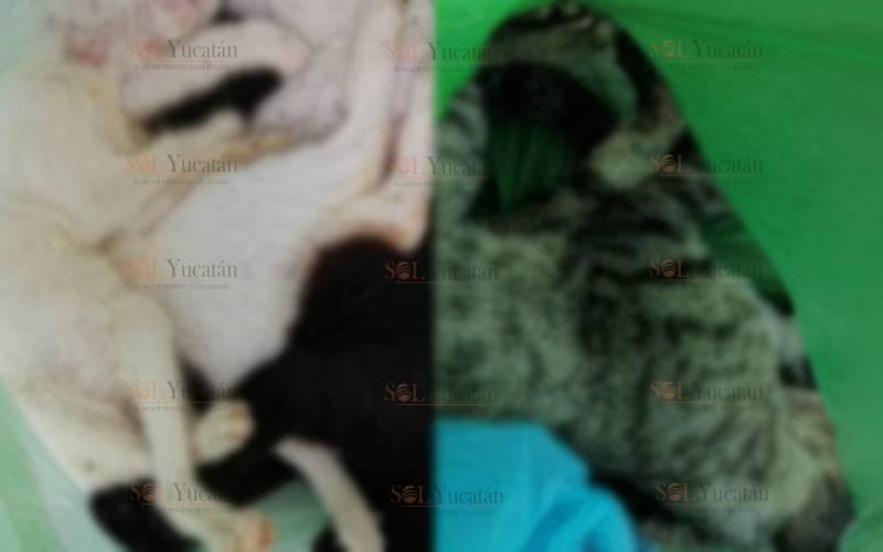 REPORTAN 30 GATOS MUERTOS EN LA COLONIA JESÚS CARRANZA