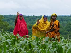 3 Somali Bantu women in the field at Liberation Farms