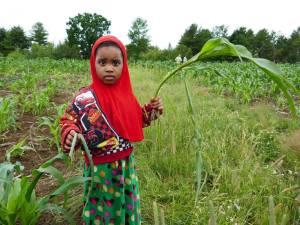 Somali Bantu Girl harvesting produce