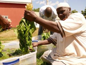 Somali Bantu man with organic produce at Liberation Farms