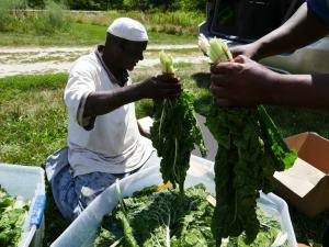Somali Bantu men with organic produce at Liberation Farms