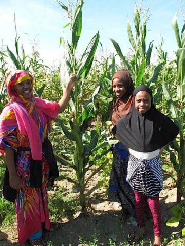 Three women standing in a field next to their African flint corn stalks