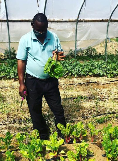 Muhidin harvesting chard from Liberation Farms