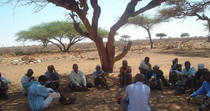 elders under a tree