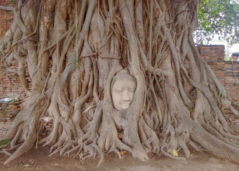 Buddha head embedded in a tree, Ayuthaya
