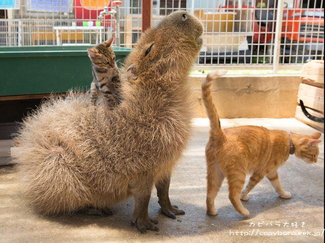 Episode 3 - Jeannette: Animals sitting on Capybara's Tumblr