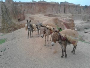 Donkeys_carrying_load_of_soil_in_Ramin_Tifa_pond_in_kano_state_(2)