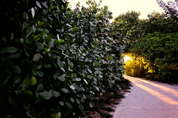 One of the many enchanted paths in Naples.